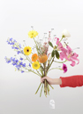 A Critic's Bouquet by Vincenzo Latronico for the editor
